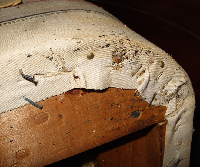 bed bugs nashua nh