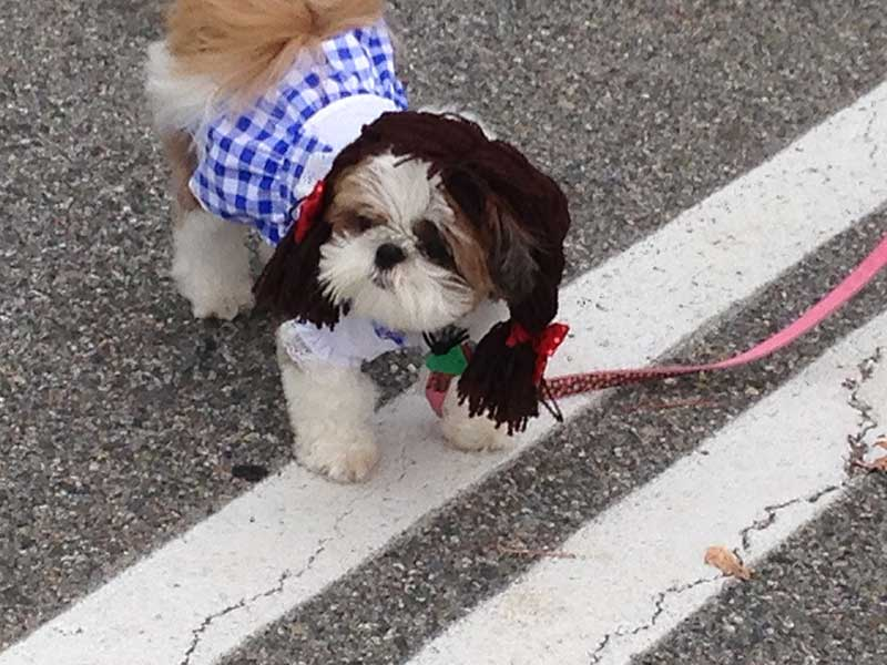Dog in Dorthy Costume